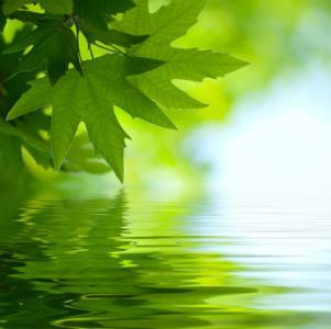 Nachhaltigkeit - für eine saubere Umwelt